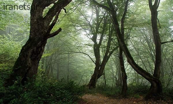 جنگل الیمستان بهار