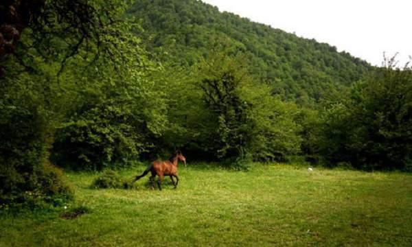 جنگل الیمستان روستای الیمستان