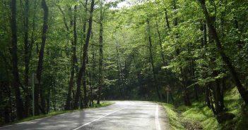 جنگل دوهزار 1