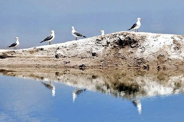 تالاب میقان پرندگان