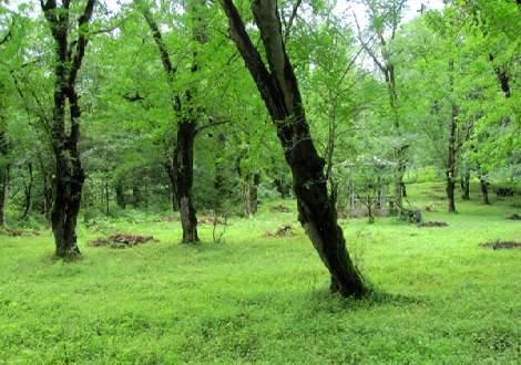 جنگل دوهزار 4