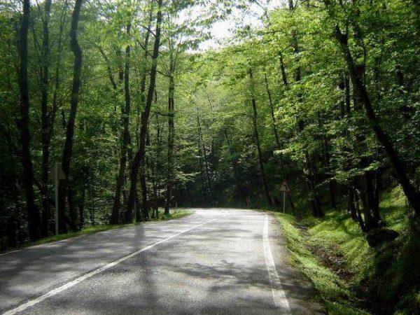 جنگل دالخانی مازندران